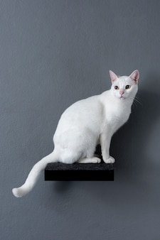 White cat sitting on shelf