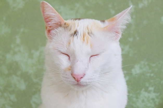 White cat sitting sweetly sleep with peace of mind and relaxation.