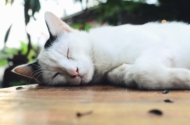 Белый кот спит на столе в кофейне