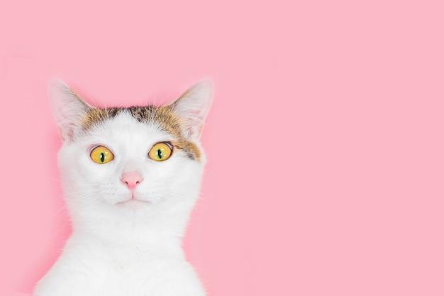 Белый кот полосатый на розовом фоне, забавный кот