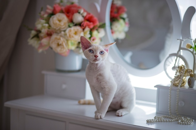 White cat with blue eyes sitting on the dressing table in the room