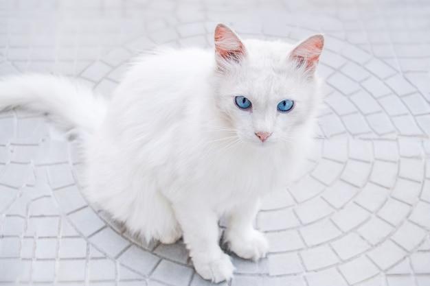 青い目をした白猫。猫は灰色のアスファルトの上の通りに座っています