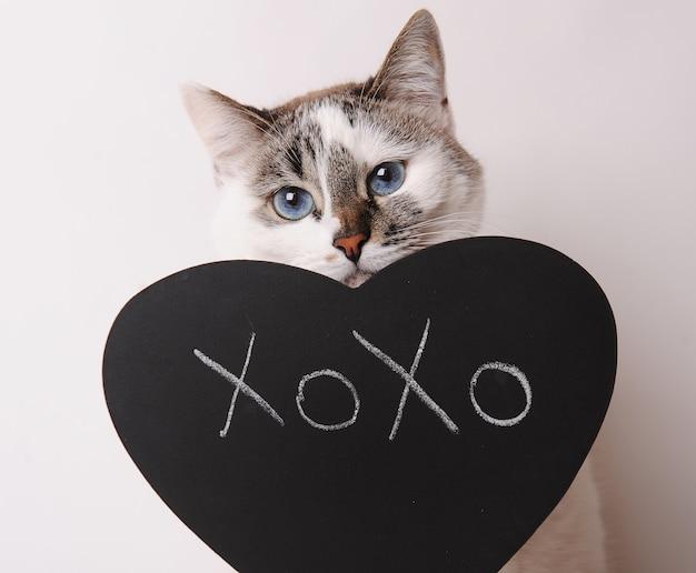 칠판에 xoxo라는 글자가 있는 파란 눈을 가진 흰 고양이