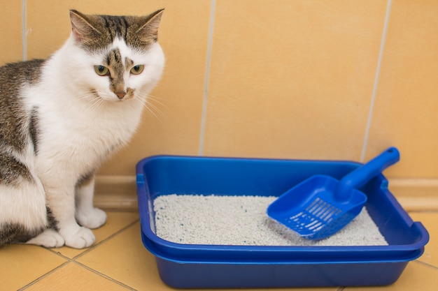A white cat with gray spots sits near a blue toilet for cats.