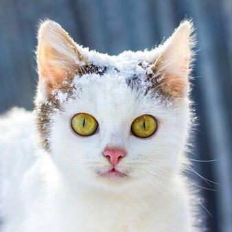 降雪時の冬に緑色の目を持つ白猫