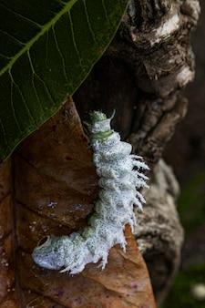 Белая гусеница на листе в природе