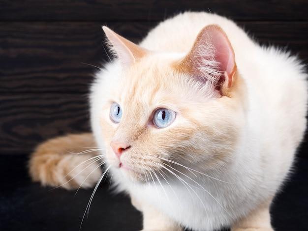 White caton black