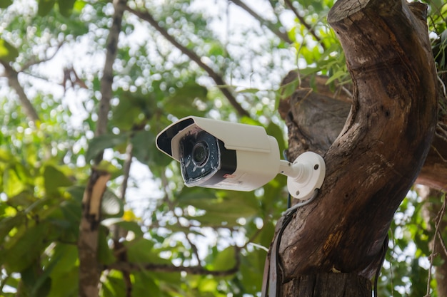 White cctv installed on the tree which refer to harmony between technology and nature.