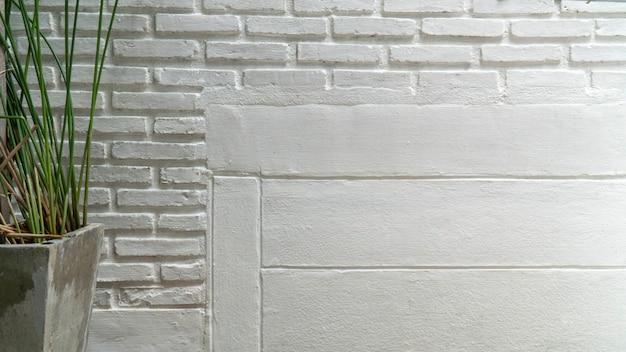 흰색 시멘트 벽과 화분에 있는 식물.