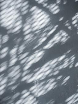 Белая цементная стена с тенью дерева