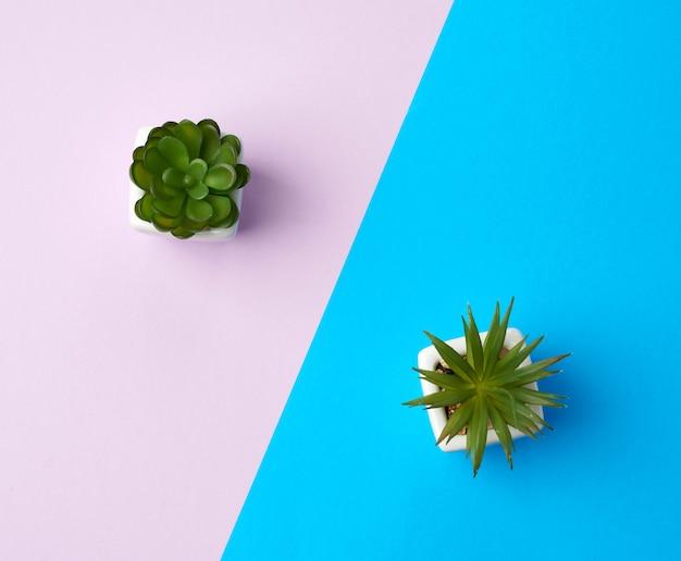 青紫色の背景に植物と白いセラミックポット