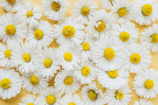 노란색에 흰색 카모마일 데이지 꽃 패턴