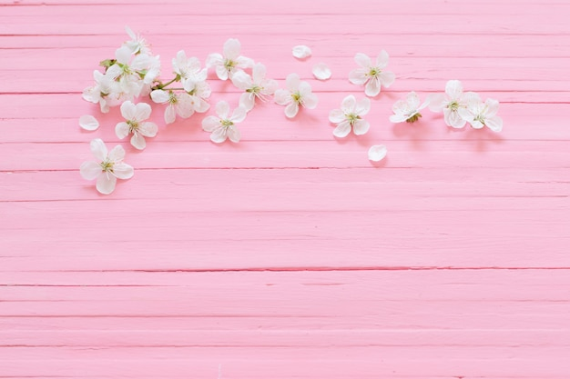 핑크 나무 표면에 하얀 벚꽃 꽃
