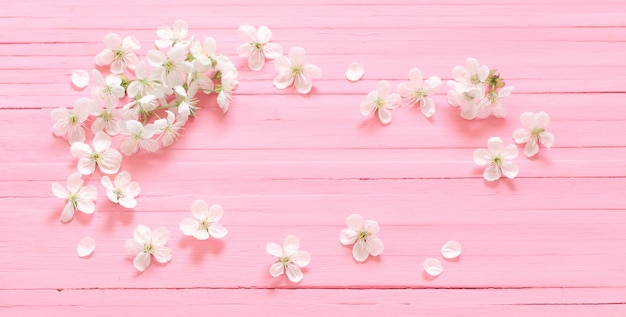 White cherry flowers on pink wooden surface