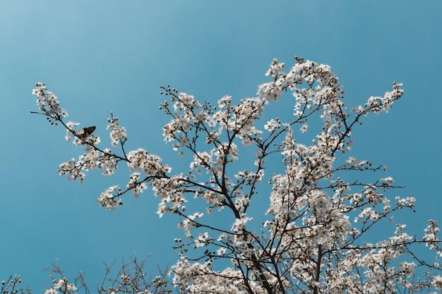 하늘 배경 위에 봄 정원에서 하얀 벚꽃 꽃