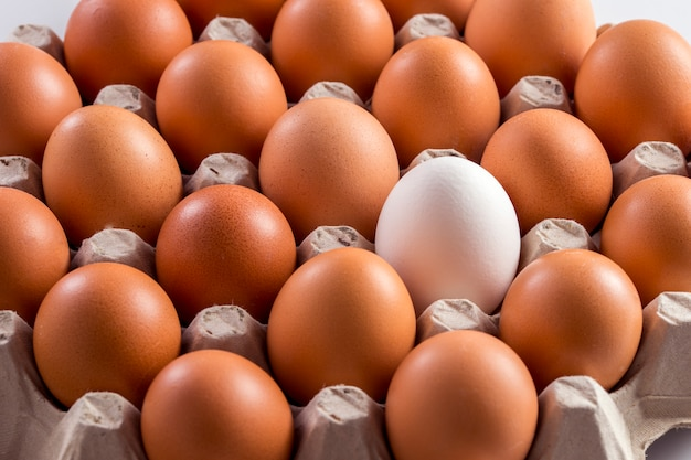 White chicken egg among brown in the tray storage
