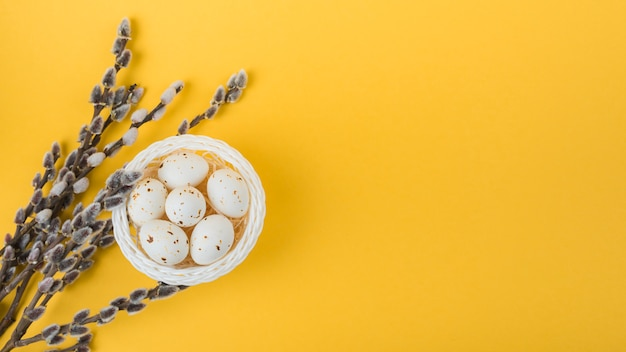 White chicken eggs in bowl with willow branches