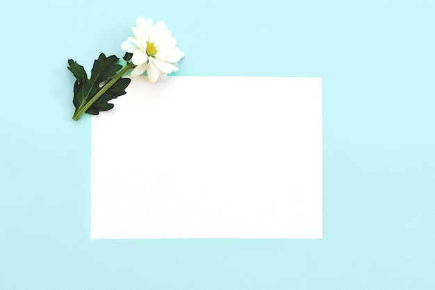 White chrysanthemum over blank card or paper sheet. top view