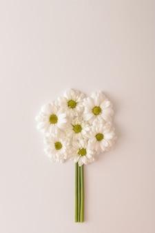 Белые цветы хризантемы расположены по кругу на белом фоне. однотонные цвета. свадебное весеннее понятие. плоская планировка.