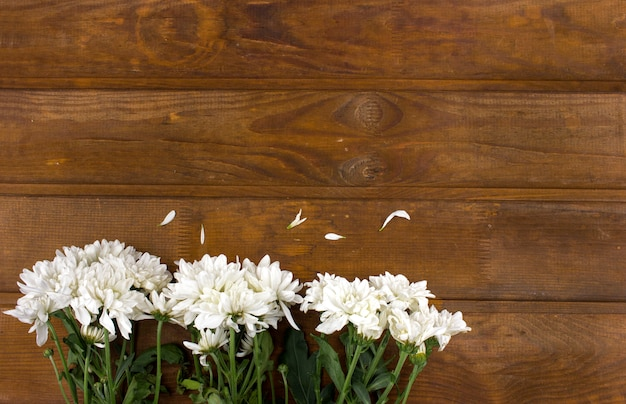 White chrysanthemum flowers on a brown wooden background