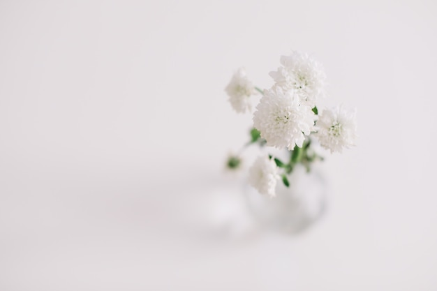 テーブルの上の花瓶に白い菊