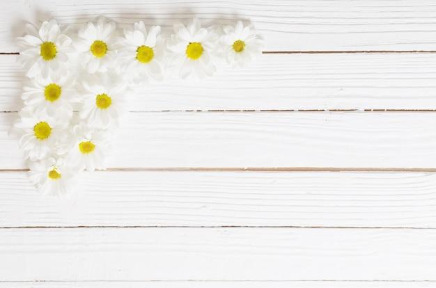 White chrysanthemum on white wooden background