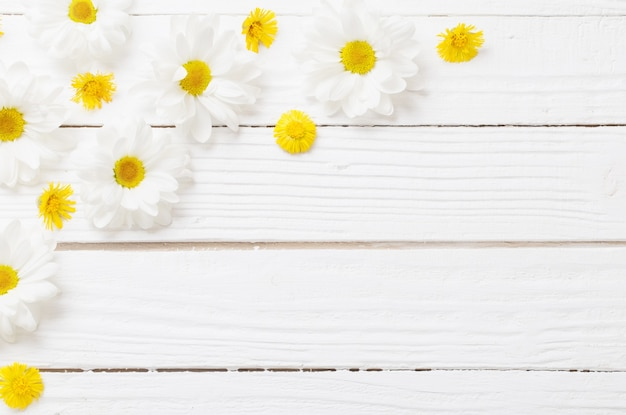 White chrysanthemum and yellow coltsfoot on white wooden background