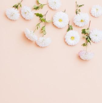 ピンクの紙の背景に白い菊