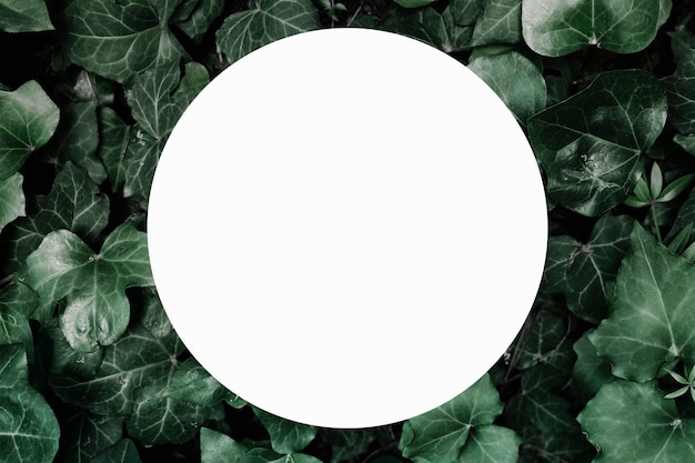 White circular blank frame over the ivy background