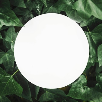 White circular blank frame over the ivy leaves