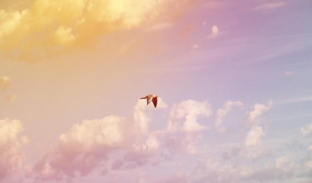 Белые облака в голубом небе цвет закат лето