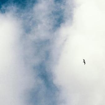 空に一羽の鳥と白い雲