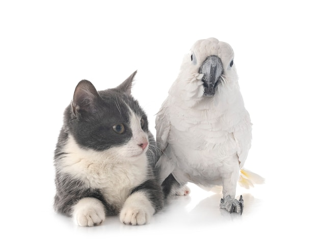 White cockatoo and cat isolated on white