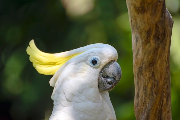 트리 로그에 흰색 앵무새
