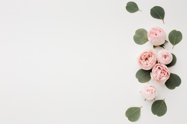White copy space background with roses arrangement