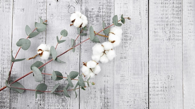 Белые цветы хлопка и зеленые листья эвкалипта на серой деревянной стене, вид сверху