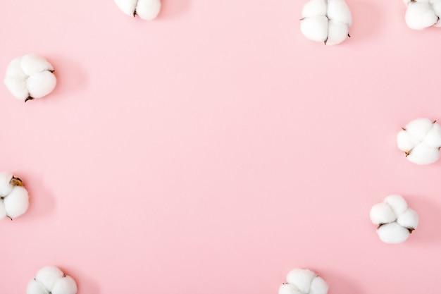 Белые хлопковые цветы на розовом фоне, плоский вид сверху