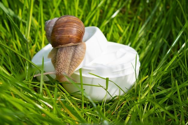 정원의 푸른 잔디에 달팽이 점액이 있는 흰색 크림, 아름다운 피부 관리.