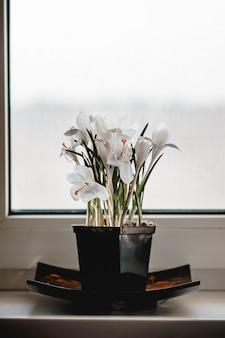 窓枠に咲く白いクロッカスの花