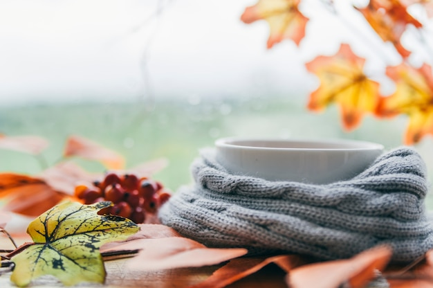 White cup in knitted scarf with maple leaves