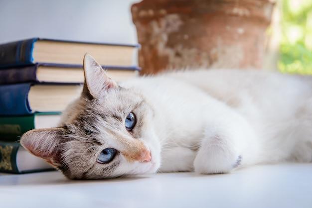 本のスタックの横にある窓辺に横たわっている青い目をした白いかわいい猫