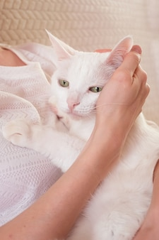 White cute cat in the woman's arms. the concept of pet care, zoopsychology, veterinary medicine.