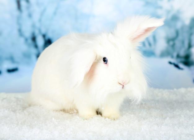 Белый милый кролик на зимнем фоне