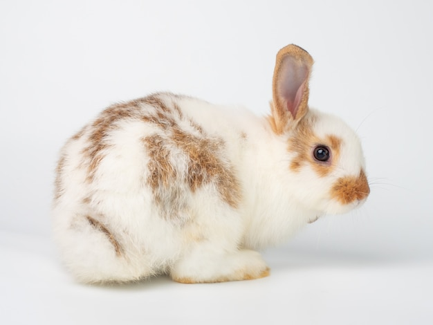 White cute young rabbit acting turn one's back on