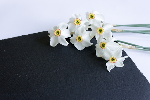 White daffodils on on a black . the  of spring. gentle spring flower.