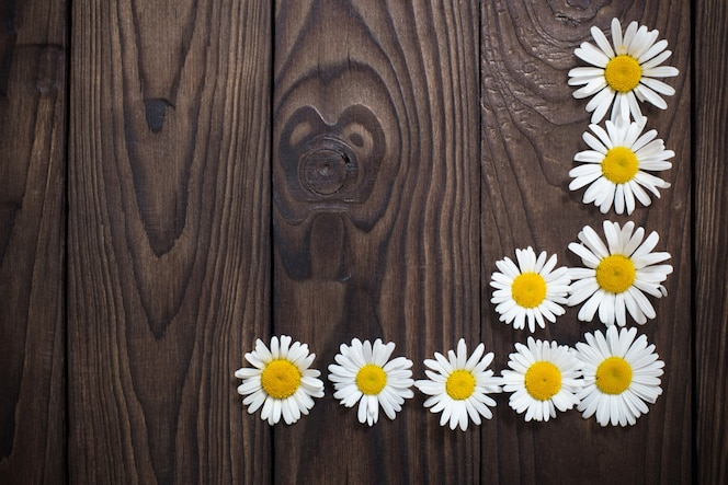 White daisies on old wooden background