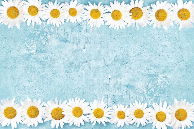 White daisy border on blue wall. copy space, top view. summer concept