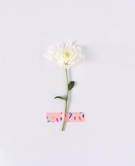 柔らかな白い背景に鮮やかな粘着テープで白いデイジーの花自然な背景のコピースペース