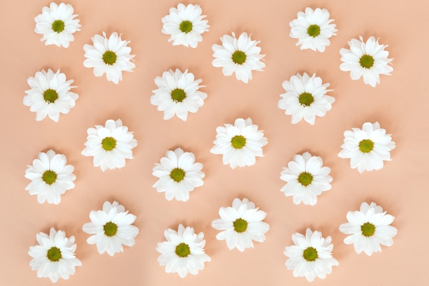 ベージュ色の背景に白いデイジーの花のパターン