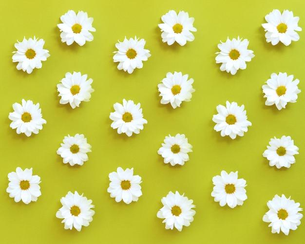 緑の背景に白いデイジーの花のパターン